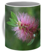 Callistemon Viminalis Taree Pink Weeping Bottlebrush Flowering Trees Of Hawaii Coffee Mug