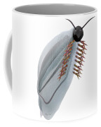Cambrian Pikaia Fish Coffee Mug
