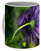 Camera Shy Daisy Coffee Mug