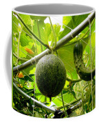 Cantaloupe And Hanging On Tree 1 Coffee Mug