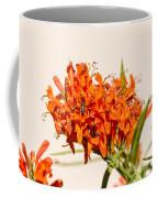 Cape Honeysuckle - The Autumn Bloomer Coffee Mug