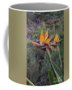 Captivating Bird Of Paradise In Full Bloom Coffee Mug