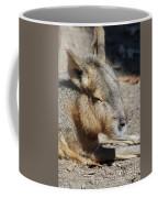 Capybara Resting In The Warm Sunlight Coffee Mug