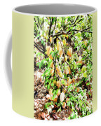 Carambola  Coffee Mug