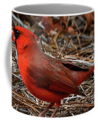 Cardinal On Pine Straw Coffee Mug