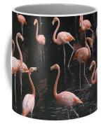 Caribbean Flamingoes At The Sedgwick Coffee Mug by Joel Sartore