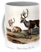Caribou (rangifer Caribou): Coffee Mug
