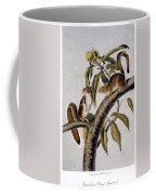 Carolina Grey Squirrel Coffee Mug