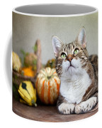 Cat And Pumpkins Coffee Mug