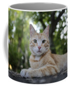 Cat Volterra Italy Coffee Mug