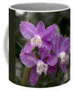 Cattleya Loddigesii Var. Puntata  'marisa 3'  0831 Coffee Mug
