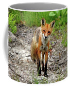 Cautious But Curious Red Fox Portrait Coffee Mug