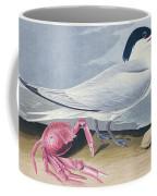 Cayenne Tern Coffee Mug by John James Audubon