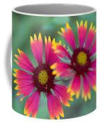 Cedar Park Texas Indian Blanket Coffee Mug