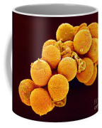 Cedar Pollen Sem Coffee Mug by Susumu Nishinaga and SPL and Photo Researchers