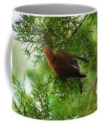 Cedar Waxwing Beauties 1 Coffee Mug