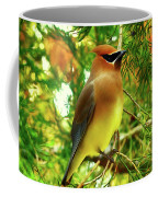 Cedar Waxwing Beauties 11 Coffee Mug