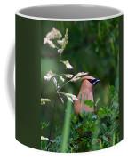 Cedar Waxwing Facing Right Coffee Mug