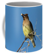 Cedar Waxwing Has A Snack Coffee Mug