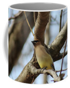 Cedar Waxwing Coffee Mug