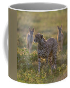 Cheetah Acinonyx Jubatus And Jackals Coffee Mug