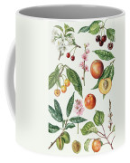 Cherries And Other Fruit-bearing Trees  Coffee Mug