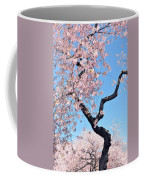 Cherry Blossom Trilogy II Coffee Mug