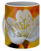Cherry Flower In The Spring Coffee Mug