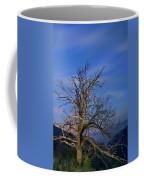 Centenary Chestnut At Blue Hour Coffee Mug