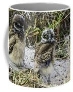 Chick Burrowing Owl  Coffee Mug