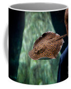 Child Watching Spotted Ray Fish Coffee Mug