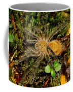 Chilean Tarantula Coffee Mug