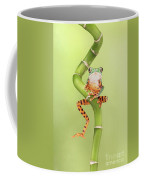 Chilling Tiger Leg Monkey Tree Frog Coffee Mug
