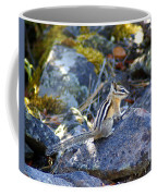 Chipmunk On The Rocks Coffee Mug