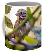 Chipping Sparrow In The Brush Coffee Mug