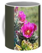 Cholla In Bloom Coffee Mug
