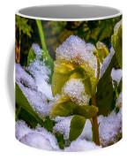 Christmas Rose April 25 Coffee Mug