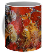 Christmas Tree Worms, Bonaire Coffee Mug