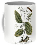 Cinnamon Tree, 1735 Coffee Mug