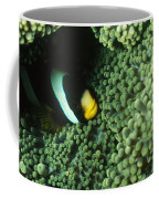 Clarks Anemonefish, Amphiprion Clarkii Coffee Mug by James Forte