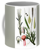 Claviceps Purpures. Recht Wolf's-foot Clubmoss, Stag's- Coffee Mug
