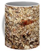 Cleaner Shrimp On Shell Covered Bottom Coffee Mug
