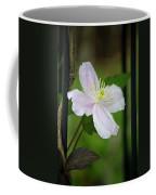 Clematis Montana Rubens Vine Coffee Mug