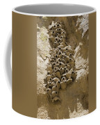 Cliff Swallow Hirundo Pyrrhonota Nests Coffee Mug