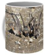 Cliff Swallows Gather Mud Coffee Mug