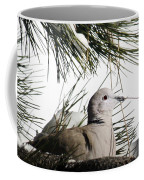 Close Up African Collared Dove Coffee Mug