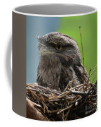 Close Up Look At A Tawny Frogmouth Sitting In A Nest Coffee Mug