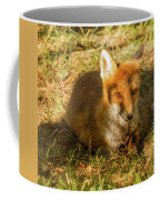 Close-up Of A Fox Resting In A Park Coffee Mug
