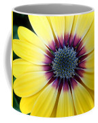 Close-up Of A Yellow African Daisy Coffee Mug