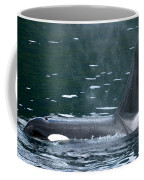 Close-up Of Killer Whale In Johnstone Coffee Mug